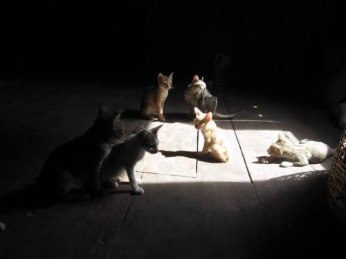 Pagoda cats